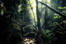 Mysterious Landscape Of Foggy Forest. Roots Of Exotic Trees, Thicket Of Shrubs And Ferns Against Sunlight Breaking Through Dense Foliage On Background. Fantasy Nature And Fairy Tale Background
