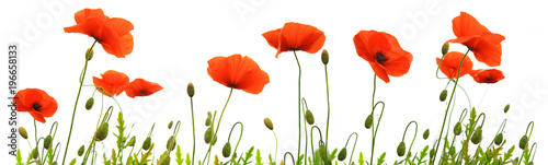 Montage in der Fensternische Mohn Red poppy flowers isolated .