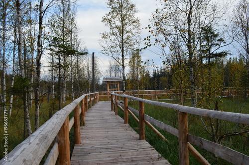 Tuinposter Weg in bos drewniana droga przez las