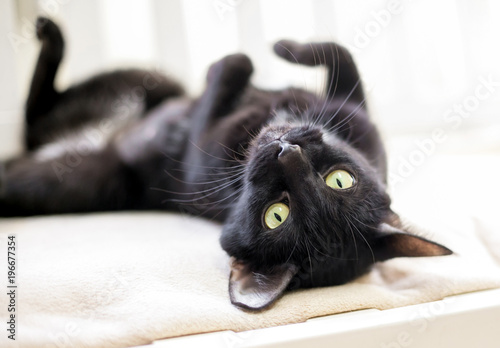 A black cat with yellow eyes lying upside down Fototapete