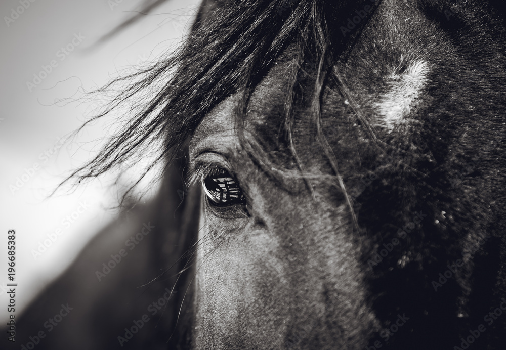 Fototapety, obrazy: A beautiful look of a horse with a reflection in his eyes