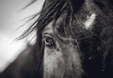 Piękny wygląd konia z odbiciem w oczach - 196685383