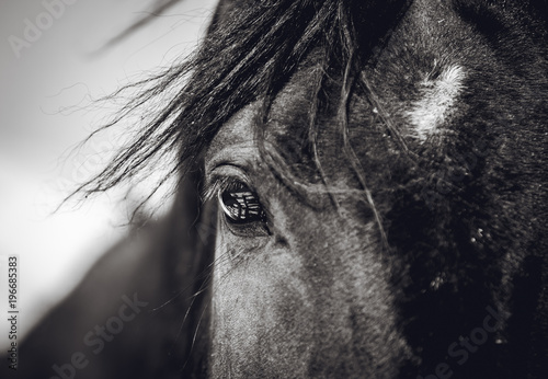 Autocollant pour porte Chevaux A beautiful look of a horse with a reflection in his eyes