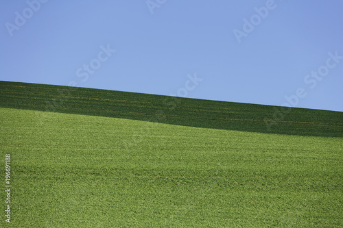 Field of freshly planted wheat, shadow across horizon