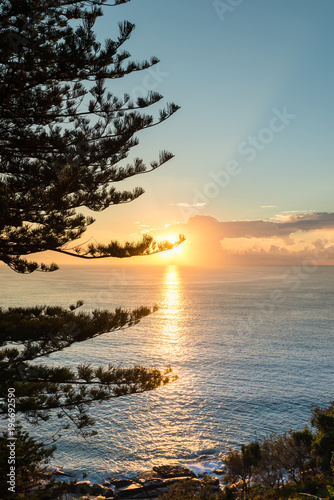 Tuinposter Ochtendgloren morning light through large pine trees by the ocean, Sydney Aust