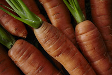 Close Up View Of Fresh Carrots