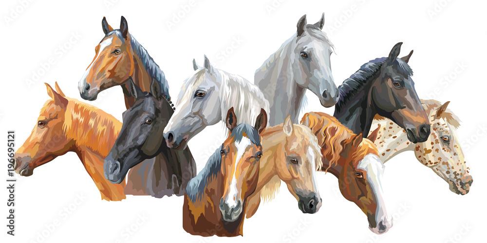 Fototapety, obrazy: Set of horses breeds3