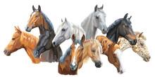 Set Of Horses Breeds3