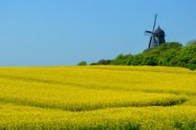 Danish Old Windmill In Pastora...
