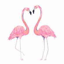 Valentines  Flamingos. Isolated Vector Illustration. Couple Birds. Watercolor Style