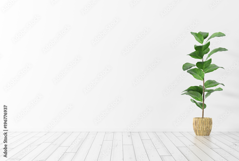 Fototapety, obrazy: Interior background with plant 3d rendering