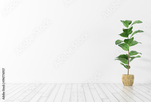 Fotomural  Interior background with plant 3d rendering