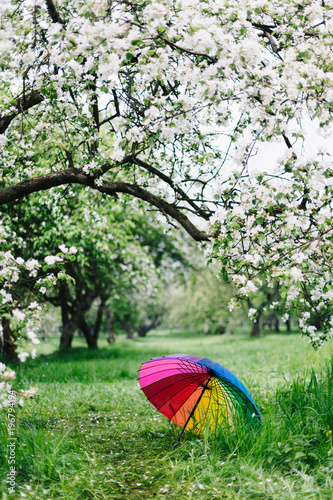 Photo Stands Camping Colorful rainbow-umbrella in the blooming garden. Spring, outdoors.