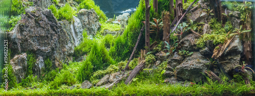 Photo sur Toile Bleu vert aquarium tank with a variety of aquatic plants.