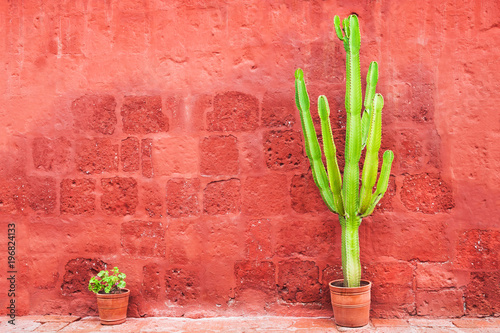 Wall Murals Cactus Green cactus against the red wall