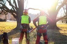 Two Arborist Men Standing Agai...