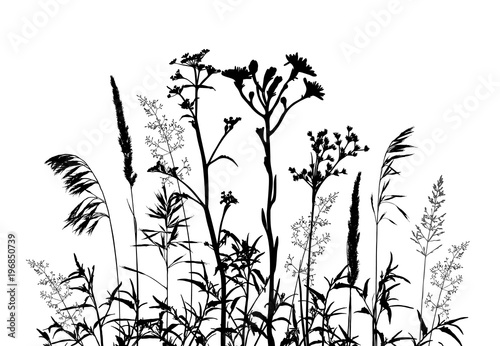 Fototapeten Künstlich Wild herbs and flowers silhouettes isolated on white.