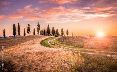 In de dag Diepbruine Tuscan cypress