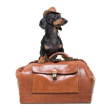 Dachshund Breed Dog, Black And Tan, Vet In Cowboy Hat Stands On Vintage Suitcase, Is Isolated On White Background