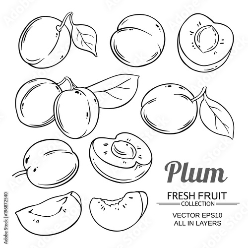 Photo plum fruits  vector set