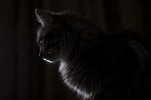 Cat In Contrast Light In Profi...