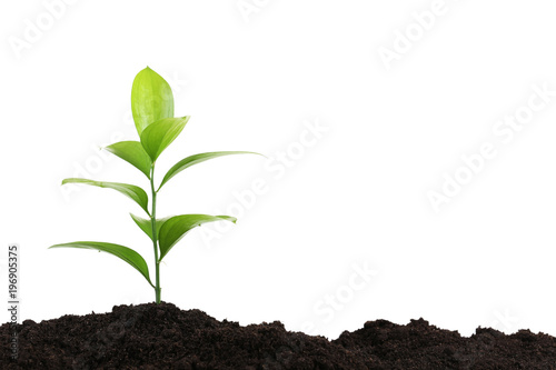 Young plant in ground on white background