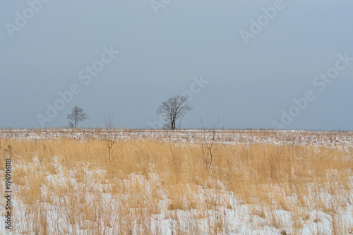 Valokuva  winter uncleared field