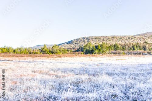 mrozowy-bialy-zimy-pola-laki-krajobraz-z-krzakami