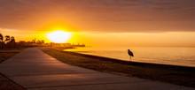 Dawn Heron Stalking