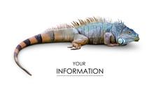 Iguana Lizard Pattern
