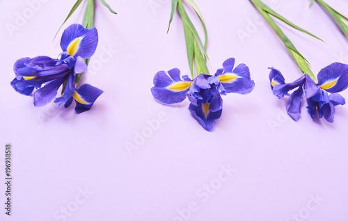 Poster Iris Greeting card purple iris
