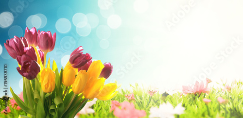 Deurstickers Vlinder Wunderschöne Tulpe