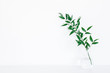 Leinwanddruck Bild - Green ruscus leaves on white background. Front view, copy space