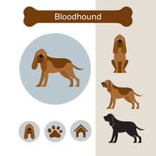Bloodhound Dog Breed Infograph...