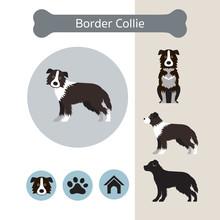 Border Collie Dog Breed Infogr...