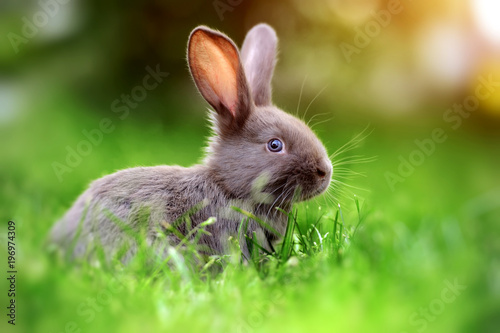 Rabbit in the grass Fotobehang