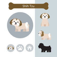 Shih Tzu Dog Breed Infographic...