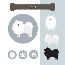 Spitz Dog Breed Infographic,  ...