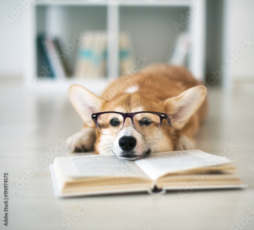 Photo Dog reading book