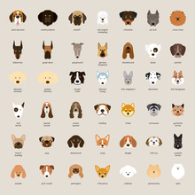 Dog Breeds, Head Set, Front View, Vector Illustration