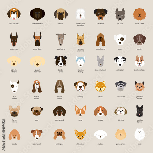 Fotografia Dog Breeds, Head Set, Front View, Vector Illustration