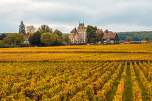 Chateau With Vineyards In The ...