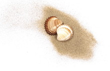 Sea Shells In Sand Pile Isolat...