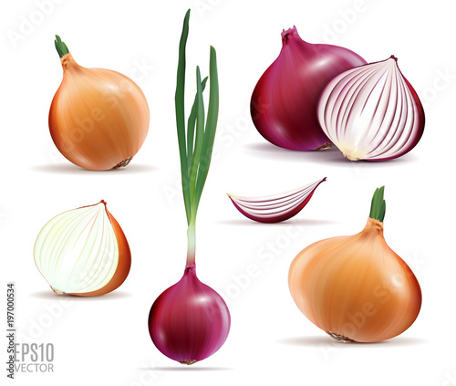 Vector collection of onions with slices isolated on white Wallpaper Mural