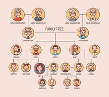 Pedigree Or Ancestry Chart Template With Portraits Of Men And Women In Round Frames. Visualization Of Links Between Ancestors And Descendants, Family Members. Modern Colorful Vector Illustration.