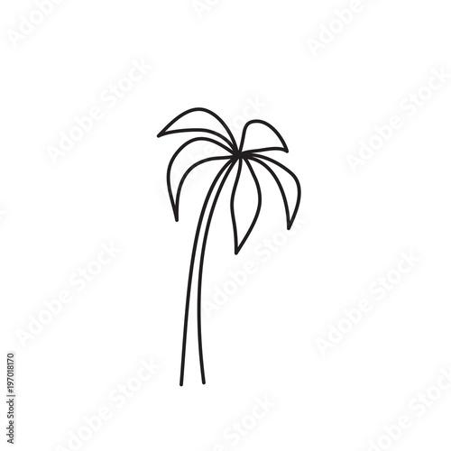 Photo palm tree icon on white background