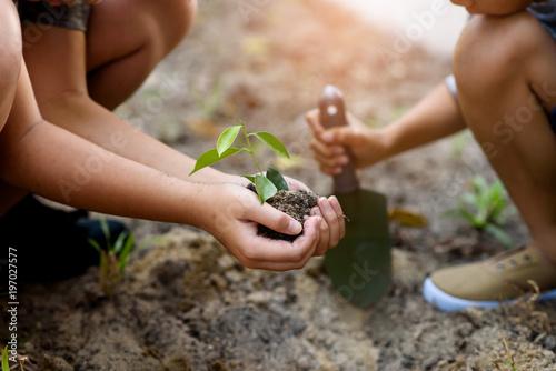 Fototapeta Young children taking care and planting a seedling. obraz na płótnie