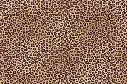 Leopard fur horizontal texture. Vector Canvas Print