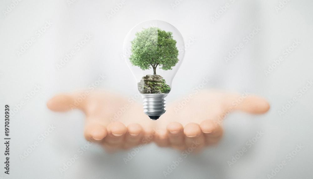 Fototapety, obrazy: Albero in mano dentro lampadina, energia sostenibile e rinnovabile