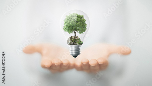 Fotobehang Natuur Albero in mano dentro lampadina, energia sostenibile e rinnovabile
